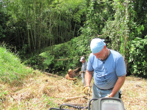 Pulling Bamboo Up the Hill