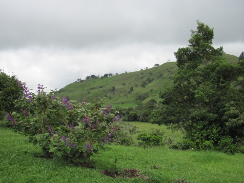 Near Janson Coffee Farm
